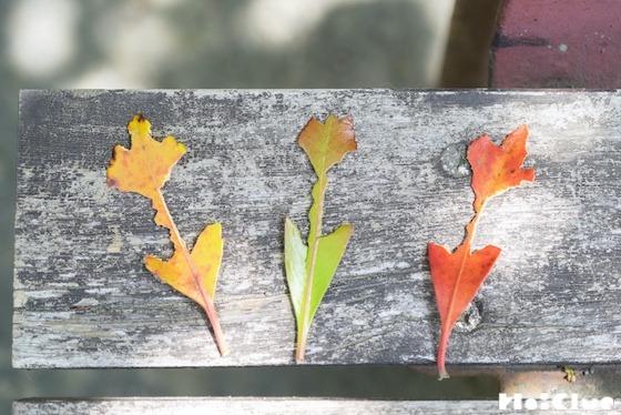 【自然遊び】葉っぱでつくる、チューリップ!〜素材/葉っぱ〜
