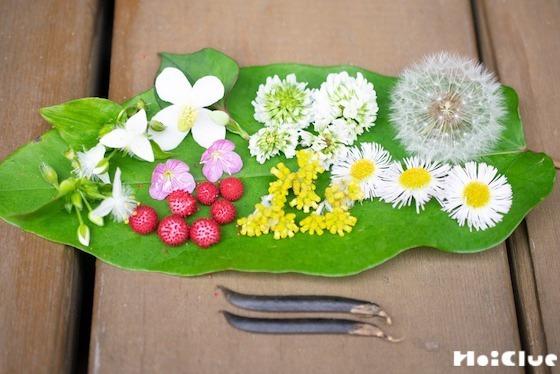 【自然遊び】初夏の野草でランチバイキングごっこ!〜素材/初夏の野草