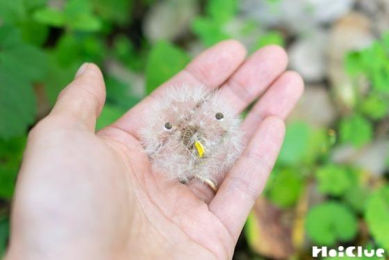 【自然遊び】タンポポの綿毛で作るホワホワひな鳥〜素材/タンポポの綿毛〜