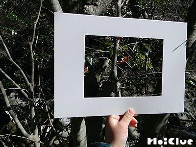 額縁から木の枝を観察している写真