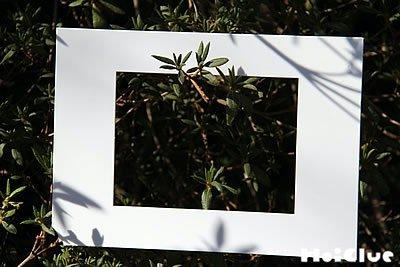 額縁から枝を観察している写真