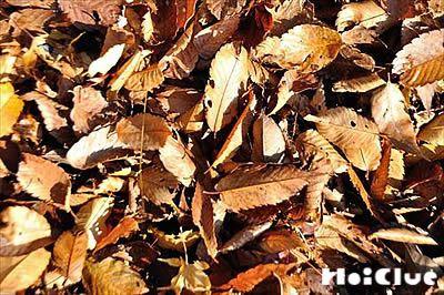枯葉の写真