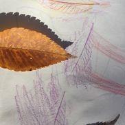 葉っぱの写し絵