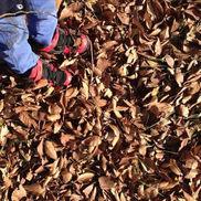 ガサガサ落ち葉遊び〜秋ならではの自然を楽しむ戸外遊び〜