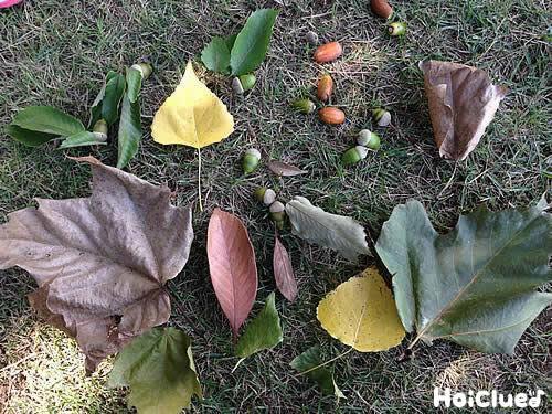 秋探したんけんたい〜自然に親しむ探検あそび〜